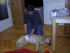 Erste Hilfe am Hund, THP Ausbildung