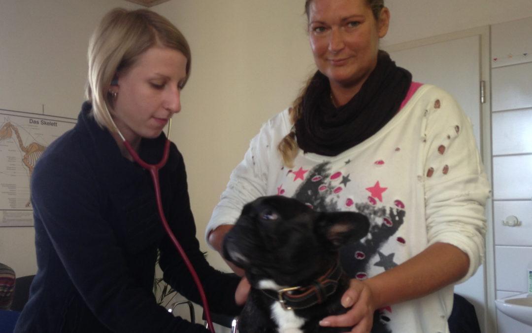 Tierheilpraktiker Ausbildung – Praktische Untersuchung Hund