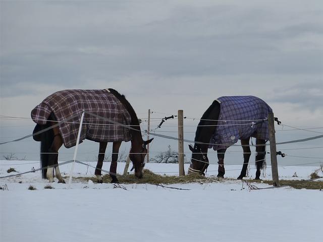 Weihnachtsmarkt mit Stallweihnacht für Tiere wie Hunde, Katzen, Pferde