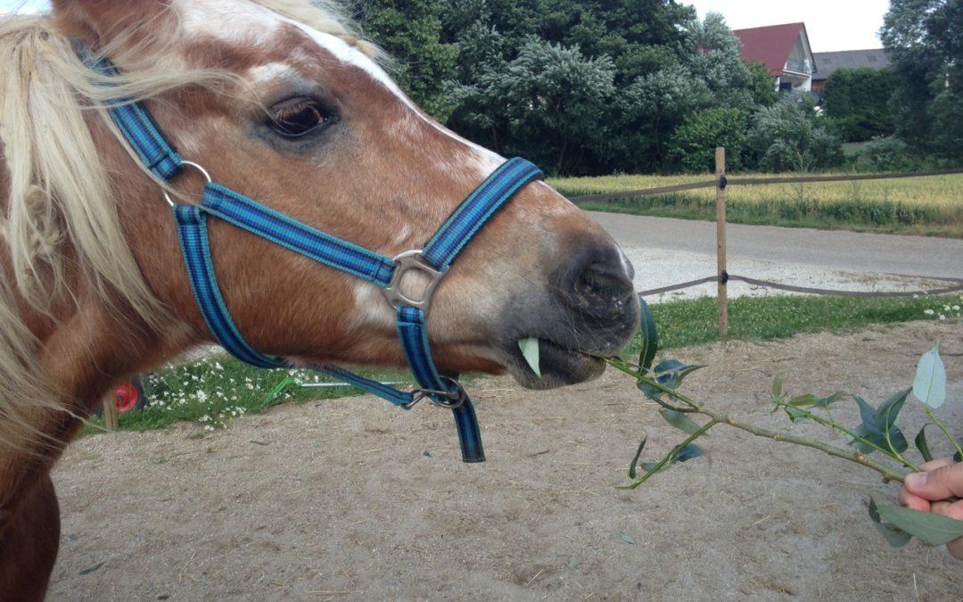 Pferdeernährung – Seminarreihe 2015 Teil II Mineralstoffe und Vitamine