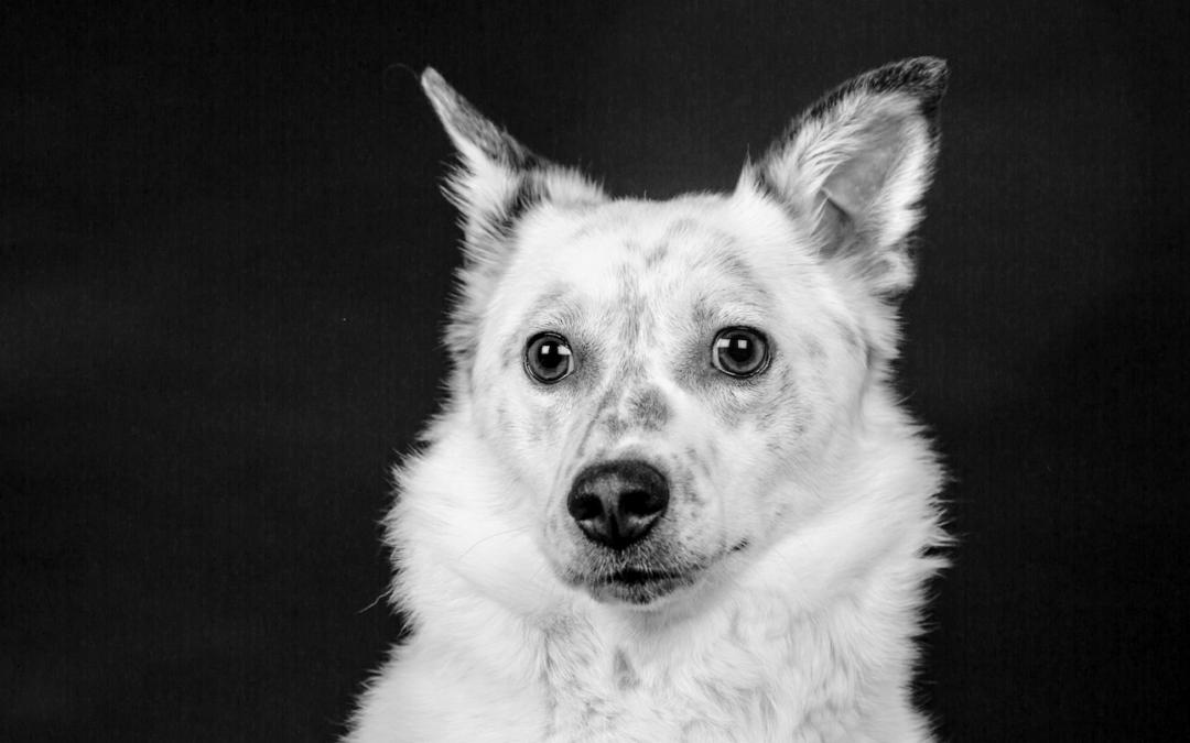 """Onlinekurs """"Mein gesunder Hund"""""""