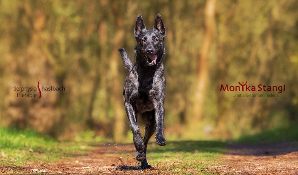 Probleme beim Bewegungsapparat des Hundes frühzeitig erkennen, Vortrag, Dorothea Liebl